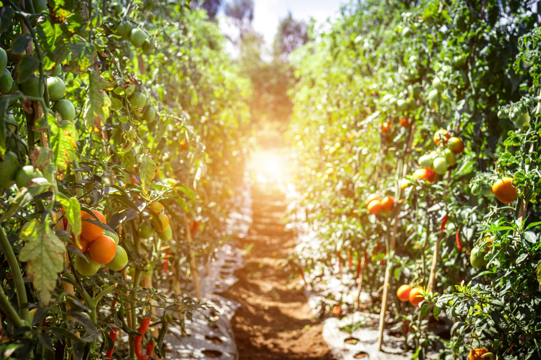 Agréculture biologique